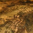 Black Walnut c/o Hearne Hardwoods